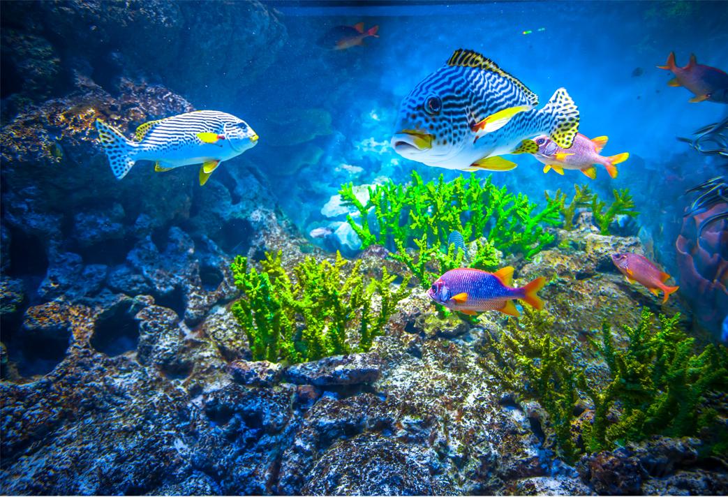 La ferme de corail